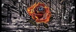 Five Hundredth Year: A Rose from Ashes